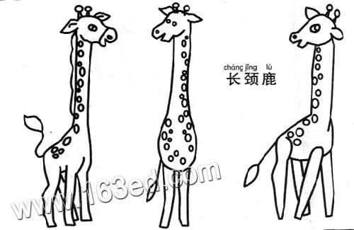 动物简笔画:长颈鹿2—简笔画网