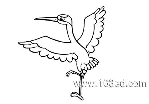 鸟类简笔画:白鹤