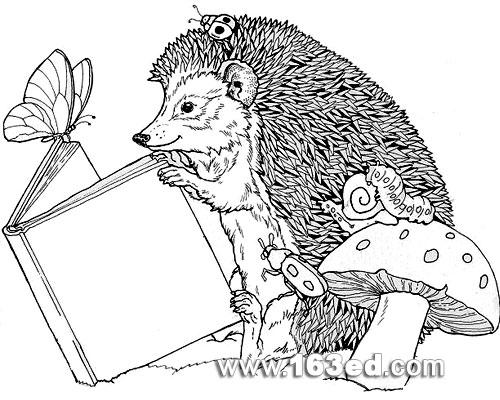 动物简笔画 看书的刺猬