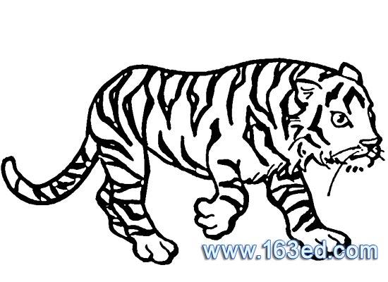 动物简笔画 老虎3