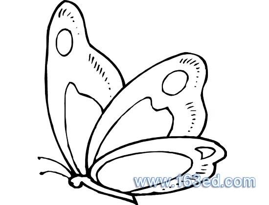 蝴蝶简笔画2