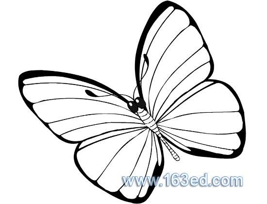 蝴蝶简笔画图片 蝴蝶昆虫简笔画步骤图片大全二