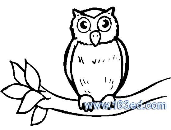 鸟类简笔画 猫头鹰9