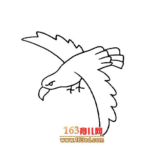 飞翔的老鹰简笔画图片