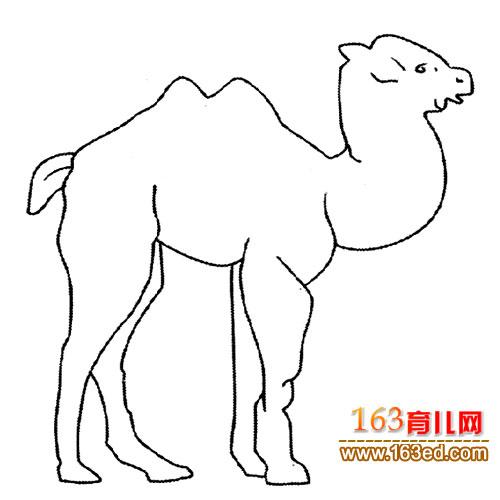 一只骆驼│动物简笔画—简笔画网