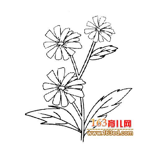 花卉简笔画 一簇菊花3