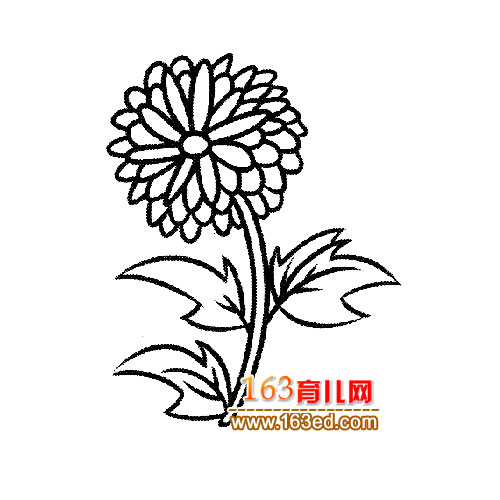 花卉简笔画 一束盛开的菊花2