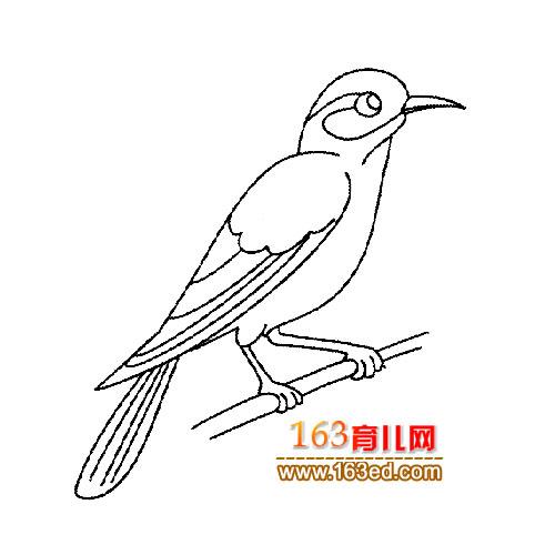 简笔画 漂亮的画眉鸟2
