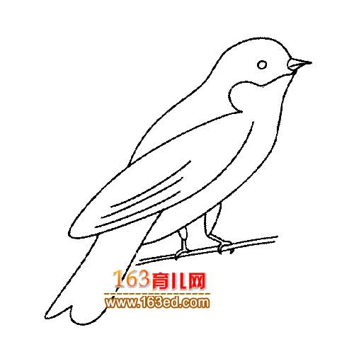 小鸟简笔画 画眉鸟3