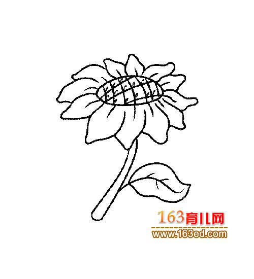 向日葵简笔画_板报网 植物绘画图片大全_剪纸绘画_老师板报网