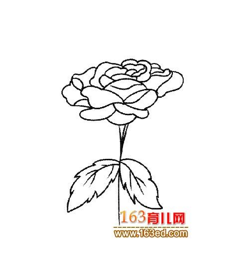 简笔画:漂亮的玫瑰花4—简笔画