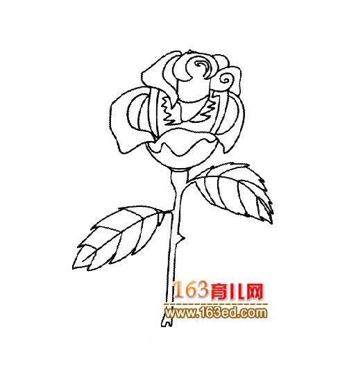 简笔画:漂亮的玫瑰花5—简笔画