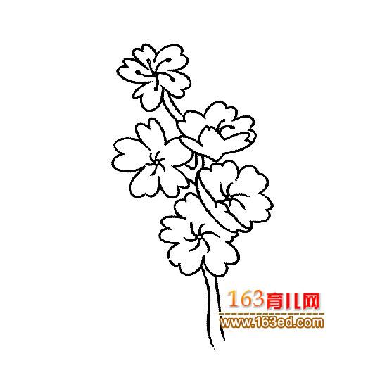 花卉简笔画:漂亮的梅花3
