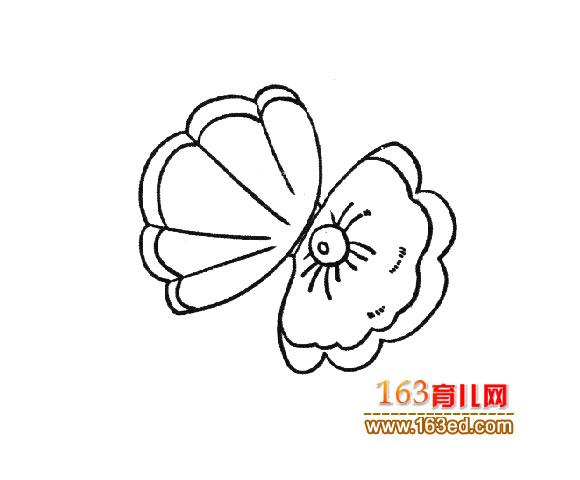 珍珠 贝壳图片 珍珠贝壳简笔画