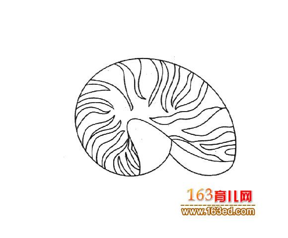 漂亮的海螺_幼儿简笔画图片3