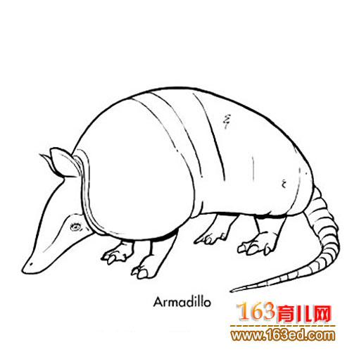 食蚁兽简笔画—简笔画网